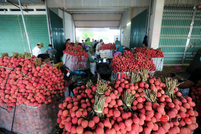 Bắc Giang: Nửa đêm bật dậy đi hái vải, điểm thu mua tắc dài cả cây số - ảnh 13