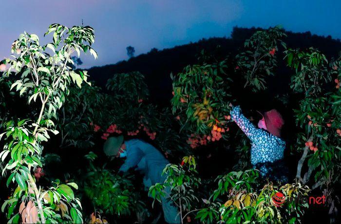 Bắc Giang: Nửa đêm bật dậy đi hái vải, điểm thu mua tắc dài cả cây số - ảnh 1
