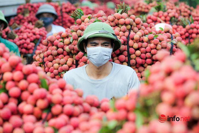 Bắc Giang: Nửa đêm bật dậy đi hái vải, điểm thu mua tắc dài cả cây số - ảnh 5