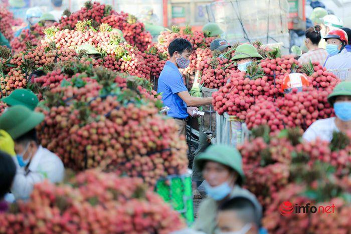 Bắc Giang: Nửa đêm bật dậy đi hái vải, điểm thu mua tắc dài cả cây số - ảnh 11