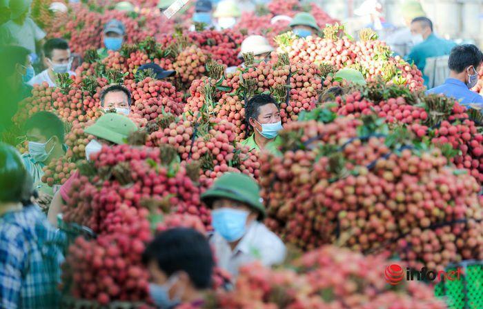 Bắc Giang: Nửa đêm bật dậy đi hái vải, điểm thu mua tắc dài cả cây số - ảnh 4