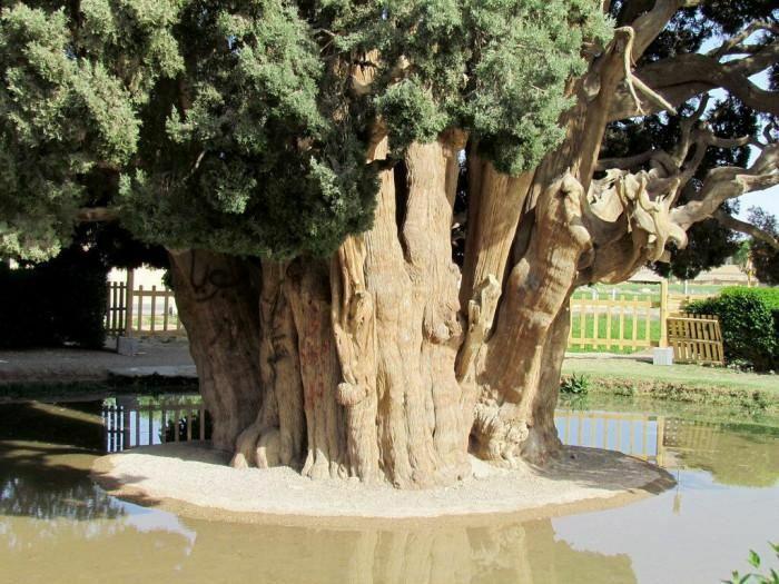 Báu vật sống 4.500 tuổi của Iran, ai cũng ước mơ một lần được chiêm ngưỡng - ảnh 4