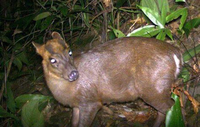 Phát hiện nhiều động vật hoang dã hiếm thấy ở Thừa Thiên- Huế - ảnh 1