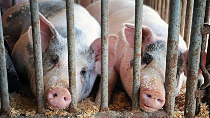 Nghị viện châu Âu bỏ phiếu áp đảo để cấm nuôi nhốt động vật - ảnh 1