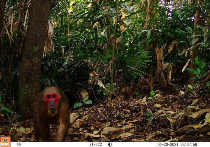 Phát hiện nhiều động vật hoang dã hiếm thấy ở Thừa Thiên- Huế - ảnh 2