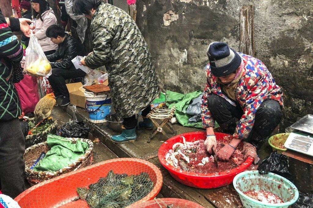 47.000 động vật hoang dã được bán tại chợ Vũ Hán trước khi COVID-19 bùng phát - ảnh 1
