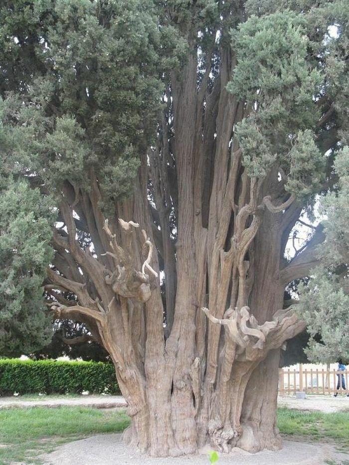 Báu vật sống 4.500 tuổi của Iran, ai cũng ước mơ một lần được chiêm ngưỡng - ảnh 2