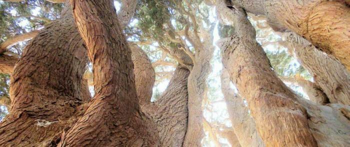 Báu vật sống 4.500 tuổi của Iran, ai cũng ước mơ một lần được chiêm ngưỡng - ảnh 3