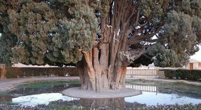 Báu vật sống 4.500 tuổi của Iran, ai cũng ước mơ một lần được chiêm ngưỡng - ảnh 5