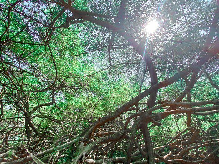 Khu di tích Giàn Gừa Cần Thơ – điểm đến với vẻ đẹp ma mị như mê cung của đất Tây Đô - ảnh 11