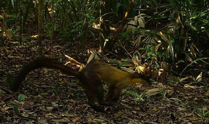 Bẫy ảnh ''tóm'' nhiều động vật hiếm thấy ở Thừa Thiên - Huế - ảnh 12