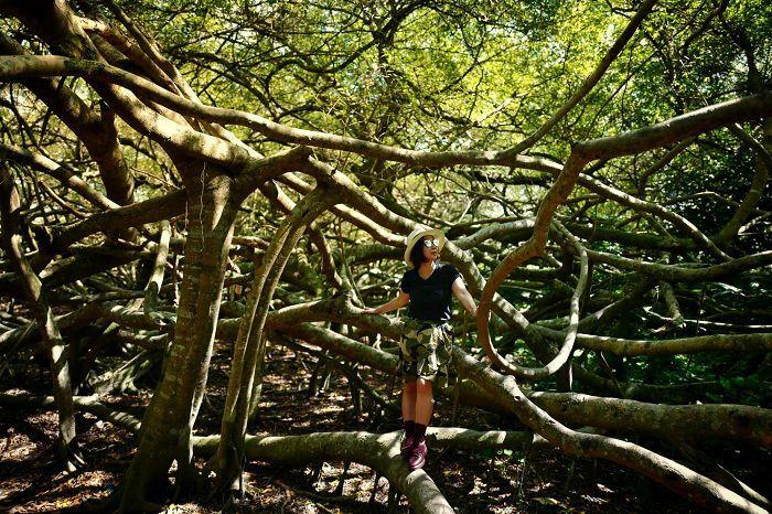 Khu di tích Giàn Gừa Cần Thơ – điểm đến với vẻ đẹp ma mị như mê cung của đất Tây Đô - ảnh 6