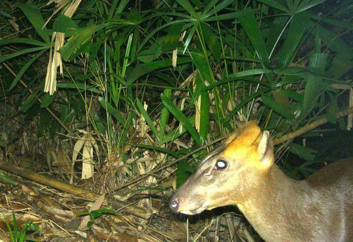 Bẫy ảnh ''tóm'' nhiều động vật hiếm thấy ở Thừa Thiên - Huế - ảnh 3