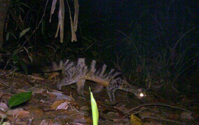 Bẫy ảnh ''tóm'' nhiều động vật hiếm thấy ở Thừa Thiên - Huế - ảnh 8