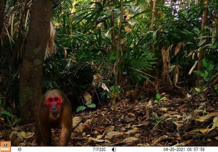 Bẫy ảnh ''tóm'' nhiều động vật hiếm thấy ở Thừa Thiên - Huế - ảnh 5