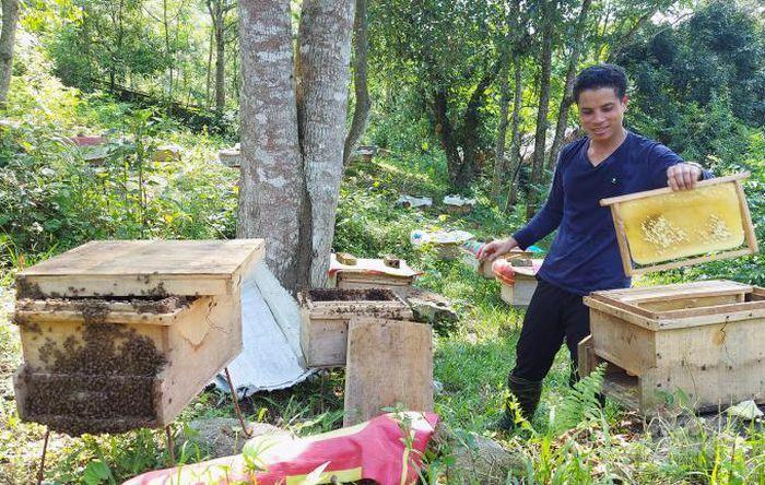 Người Thái làm chủ kỹ thuật nuôi ong lấy mật - ảnh 3