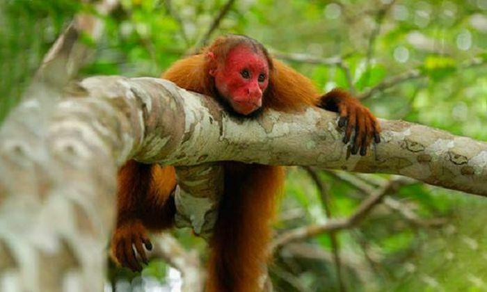 Bẫy ảnh ''tóm'' nhiều động vật hiếm thấy ở Thừa Thiên - Huế - ảnh 6