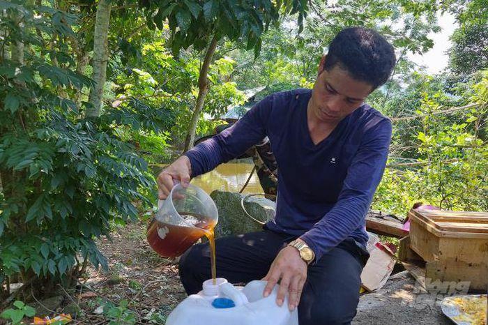 Người Thái làm chủ kỹ thuật nuôi ong lấy mật - ảnh 2