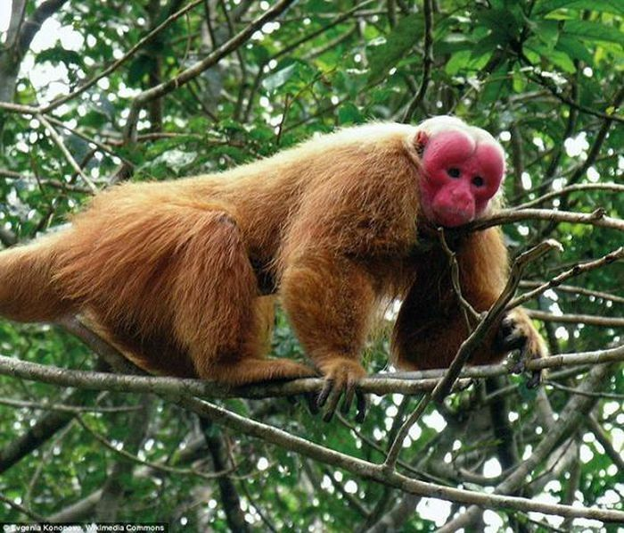 Bẫy ảnh ''tóm'' nhiều động vật hiếm thấy ở Thừa Thiên - Huế - ảnh 7