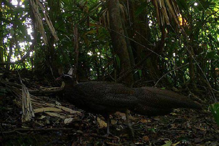 Bẫy ảnh ''tóm'' nhiều động vật hiếm thấy ở Thừa Thiên - Huế - ảnh 10