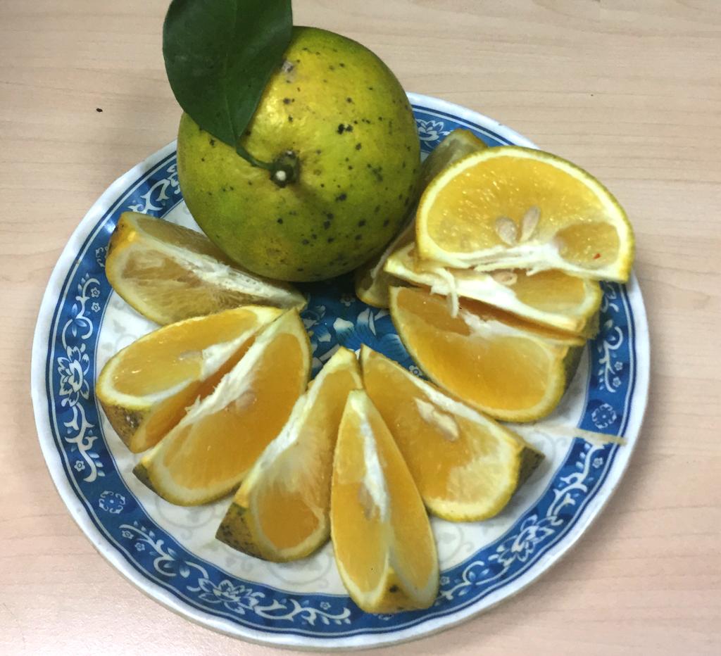 Tại sao ăn trái cây lại giúp giảm cân? - ảnh 1