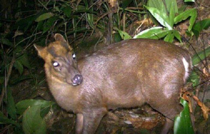 Bẫy ảnh ''tóm'' nhiều động vật hiếm thấy ở Thừa Thiên - Huế - ảnh 2