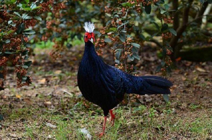 Bẫy ảnh ''tóm'' nhiều động vật hiếm thấy ở Thừa Thiên - Huế - ảnh 13