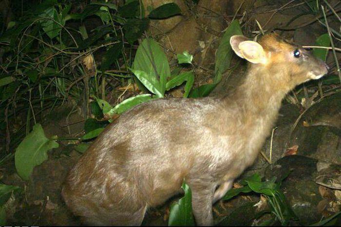 Bẫy ảnh ''tóm'' nhiều động vật hiếm thấy ở Thừa Thiên - Huế - ảnh 1