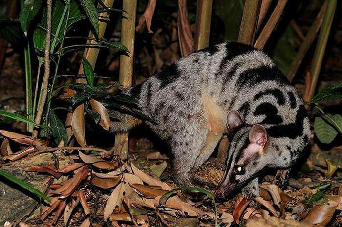 Bẫy ảnh ''tóm'' nhiều động vật hiếm thấy ở Thừa Thiên - Huế - ảnh 9