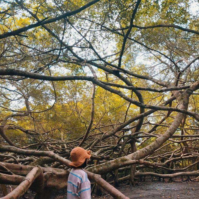 Khu di tích Giàn Gừa Cần Thơ – điểm đến với vẻ đẹp ma mị như mê cung của đất Tây Đô - ảnh 2