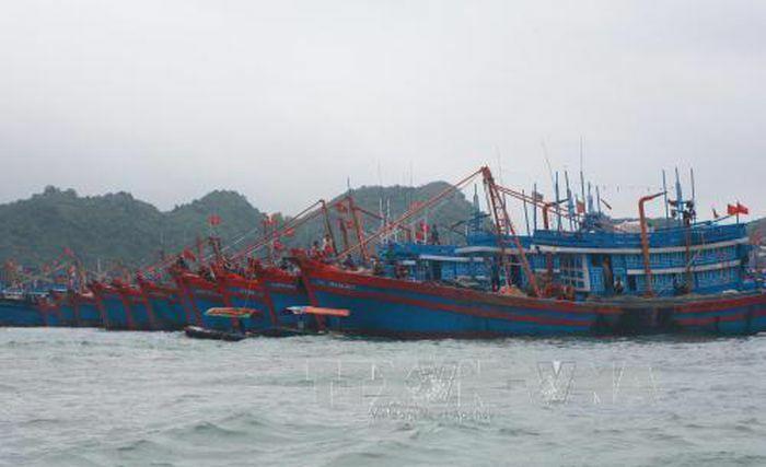 Hải Phòng: Tạm dừng hoạt động giao thông vận tải đường thủy - ảnh 1