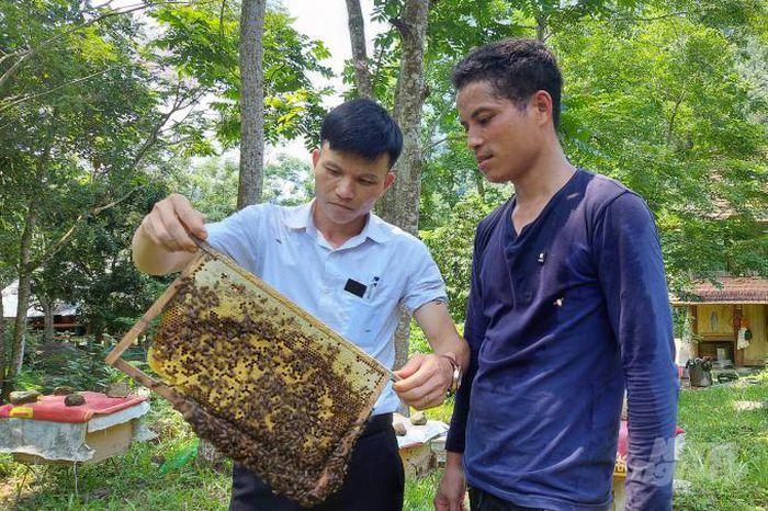 Người Thái làm chủ kỹ thuật nuôi ong lấy mật - ảnh 1