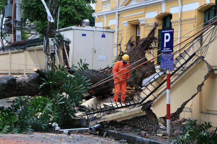 Cận cảnh hiện trường cây cổ thụ bất ngờ bật gốc, đè sập tường Tòa án nhân dân tối cao - ảnh 2