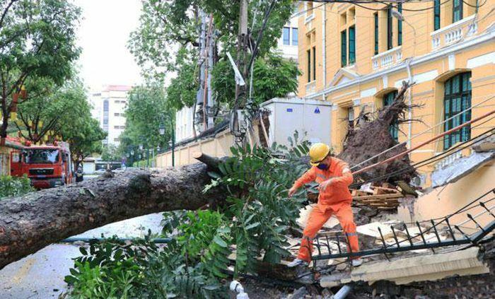 Khắc phục sự cố cây đổ trên phố Hỏa Lò - ảnh 2