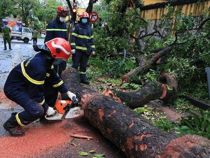 Lực lượng cứu nạn khẩn trương khắc phục sự cố cây đổ trên phố Hỏa Lò - ảnh 1