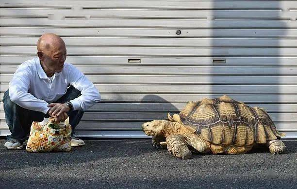 Ông lão người Nhật nuôi con rùa nặng 70kg, quãng đường 5 phút đi mất 3 tiếng: Sống chậm lại, cuộc đời quả thực đáng yêu hơn bạn nghĩ - ảnh 14