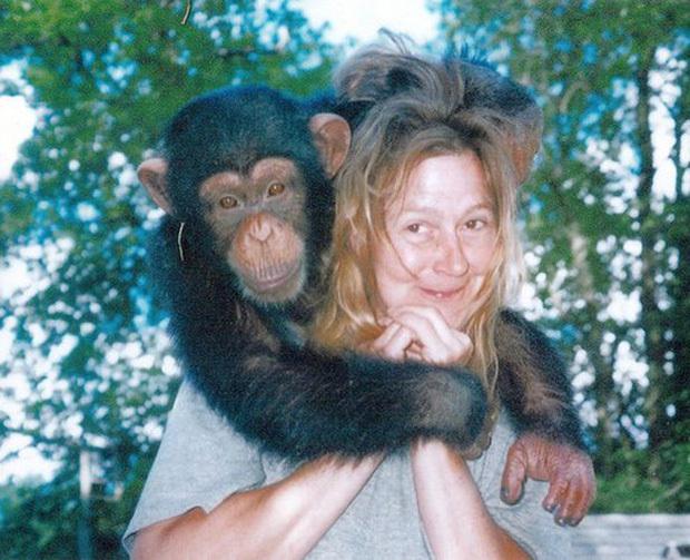 Chuyện về khỉ Travis: Sống như người suốt 14 năm bỗng 1 ngày điên cuồng cắn xé người thân, trước khi chết vẫn cố lê bước về giường của mình - ảnh 2