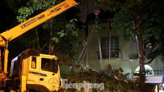 Xuyên đêm thu dọn hàng loạt cây đổ khắp phố phường Hà Nội sau mưa giông - ảnh 10