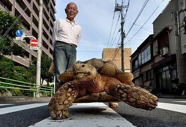 Ông lão người Nhật nuôi con rùa nặng 70kg, quãng đường 5 phút đi mất 3 tiếng: Sống chậm lại, cuộc đời quả thực đáng yêu hơn bạn nghĩ - ảnh 19