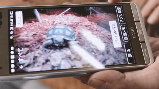 Ông lão người Nhật nuôi con rùa nặng 70kg, quãng đường 5 phút đi mất 3 tiếng: Sống chậm lại, cuộc đời quả thực đáng yêu hơn bạn nghĩ - ảnh 6