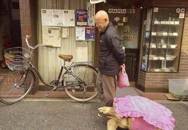 Ông lão người Nhật nuôi con rùa nặng 70kg, quãng đường 5 phút đi mất 3 tiếng: Sống chậm lại, cuộc đời quả thực đáng yêu hơn bạn nghĩ - ảnh 10