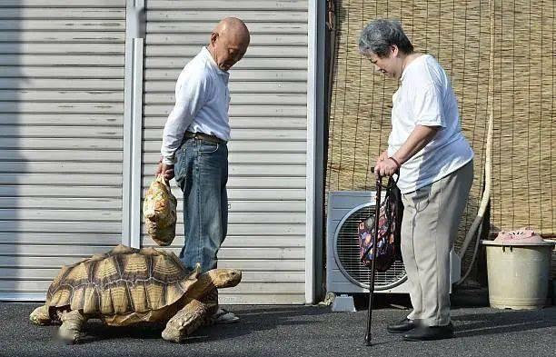 Ông lão người Nhật nuôi con rùa nặng 70kg, quãng đường 5 phút đi mất 3 tiếng: Sống chậm lại, cuộc đời quả thực đáng yêu hơn bạn nghĩ - ảnh 22