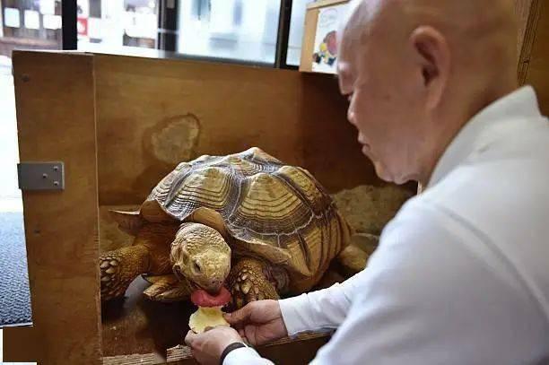 Ông lão người Nhật nuôi con rùa nặng 70kg, quãng đường 5 phút đi mất 3 tiếng: Sống chậm lại, cuộc đời quả thực đáng yêu hơn bạn nghĩ - ảnh 8