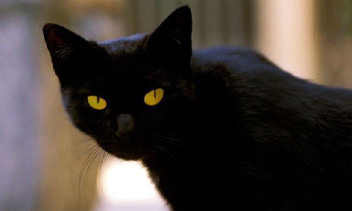 Mèo đen hồi sinh xác chết: Hiện tượng bí ẩn và lời giải khoa học - ảnh 2
