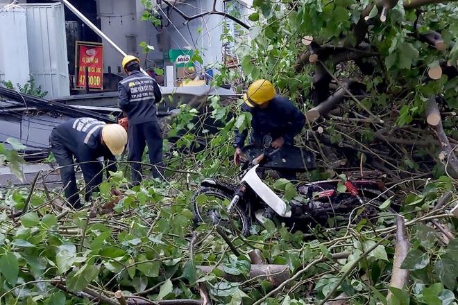 TPHCM: Cây xanh đổ đè người đi đường trong cơn mưa - ảnh 2