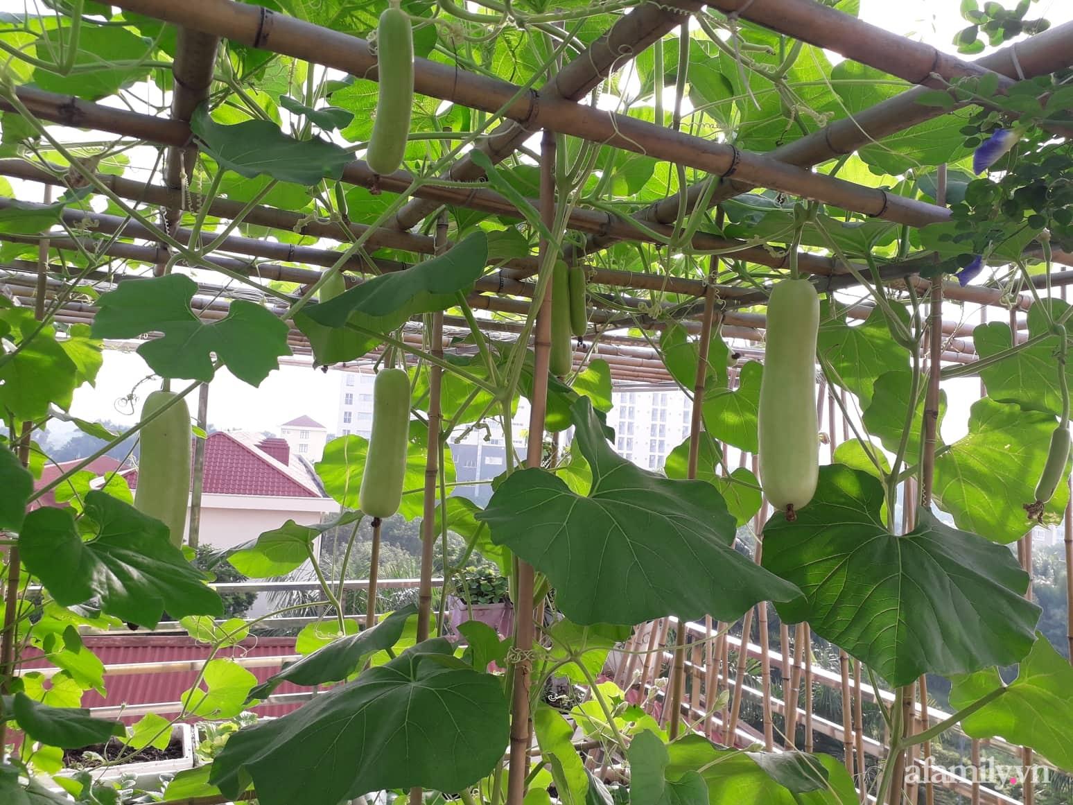 Sân thượng 50m² không khác gì trang trại với đủ loại rau quả sạch theo mùa của mẹ đảm ở Hà Nội - ảnh 2