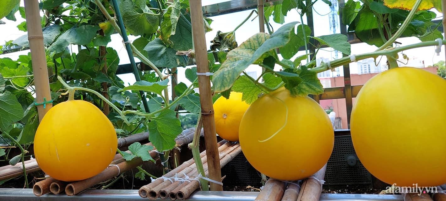 Sân thượng 50m² không khác gì trang trại với đủ loại rau quả sạch theo mùa của mẹ đảm ở Hà Nội - ảnh 21
