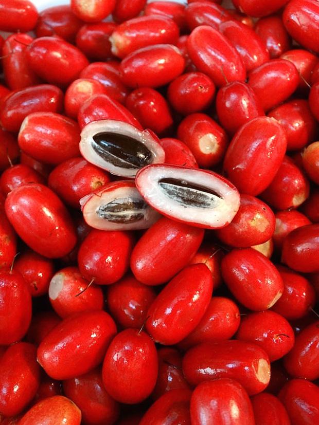 Kỳ diệu thứ quả có tên gọi ''thần kỳ'', mang năng lực biến tất cả mọi vị đắng chua cay trên cuộc đời thành vị ngọt lịm tim - ảnh 3