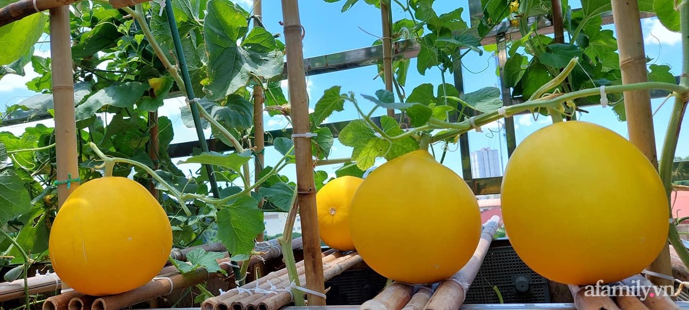 Sân thượng 50m² không khác gì trang trại với đủ loại rau quả sạch theo mùa của mẹ đảm ở Hà Nội - ảnh 9