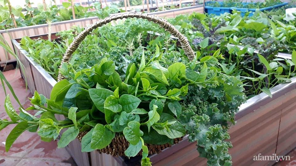 Sân thượng 50m² không khác gì trang trại với đủ loại rau quả sạch theo mùa của mẹ đảm ở Hà Nội - ảnh 13